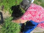 Herb gathering