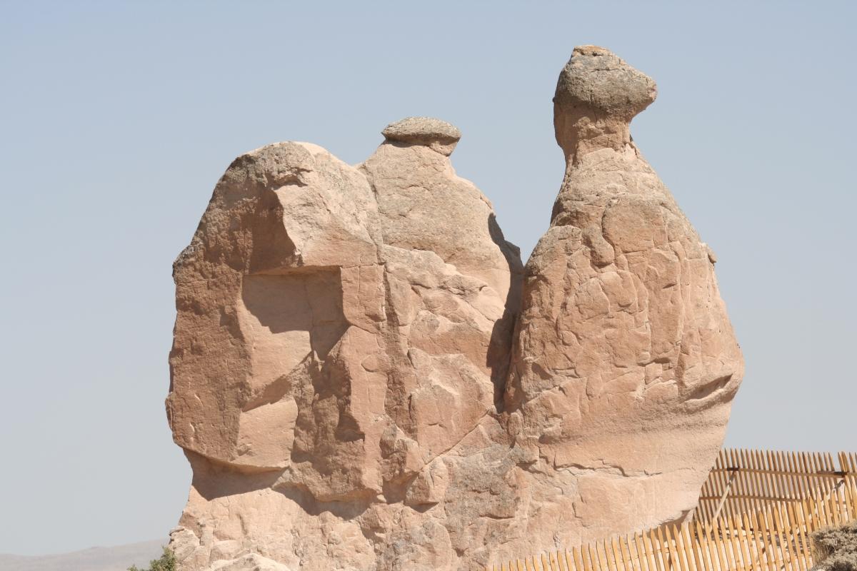 Snail or camel